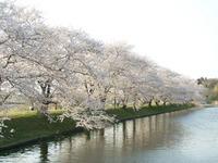 Sakura02_050409